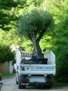 au-jardin-raisonne-paysagiste-amenagement-creation-espaces-verts