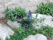 Pavage-vegetal-alternative-gazon1