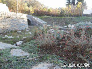 Bragassargues-creation-jardin-sec-2ans-apres