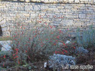 Bragassargues-jardin-sec-2ans-apres