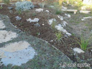 Bragassargues-jardin-sec-couvres-sol-2ans-apres