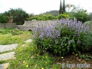 jardin-autonome-en-eau-1