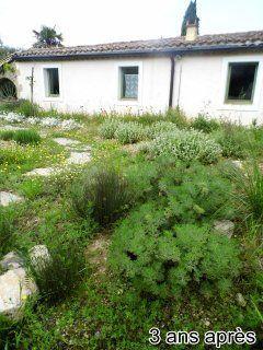 jardin-autonome-en-eau-3